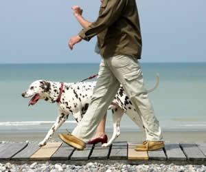 Illustration de l'article Promener son chien réduit le stress