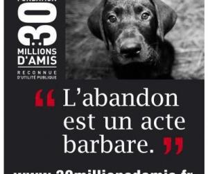Illustration de l'article Des milliers d'animaux abandonnés cet été