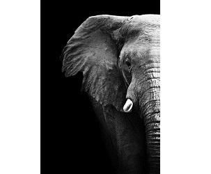 Illustration de l'article Une personne âgée tuée par un éléphant de Cirque