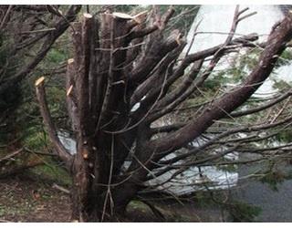 Illustration de l'article Les arbres de leur jardin ont été coupés pendant qu'ils étaient en vacances