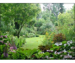 Illustration de l'article 10 conseils pour avoir un beau jardin