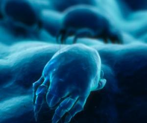 Illustration de l'article De nombreuses épidémies de Gale en ce début d'année