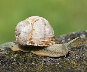 Illustration de l'article Une Congolaise invente une crème à base de... bave d'escargot