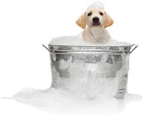 Illustration de l'article Comment devient-on toiletteur pour animaux ?