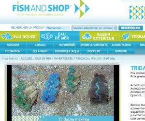 Illustration de l'article Fishandshop.com : Un site marchand à destination des passionnés d'aquariophilie