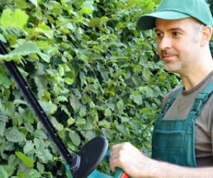 Illustration de l'article Comment payer son jardinier en CESU ?