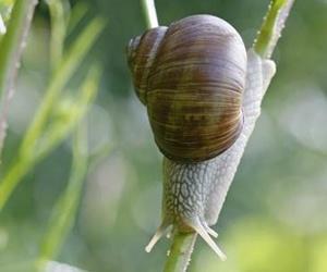 """Illustration de l'article Les escargots, pas si """"simples d'esprit"""" que ça ?"""