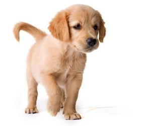 Illustration de l'article De nouveaux prestataires pour votre animal de compagnie