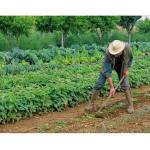 Jardinage Service