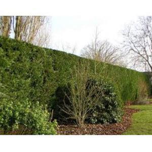 Services de jardinage a Muret, Lherm, Seysses, Tournefeuille, Labarthe-sur-Leze, Villeneuve