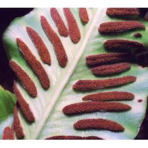 Jardinier paysagiste écolo-économe