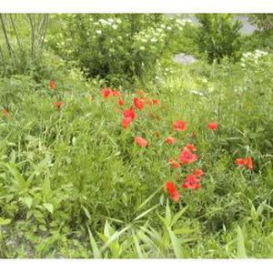 Jardinage bach 46 for Annonce recherche jardinier