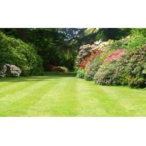 Entretien de jardin et petits travaux de maçonnerie et de bricolage