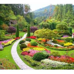 Bricolage / jardinage / nettoyage / livraison / dépannage informatique