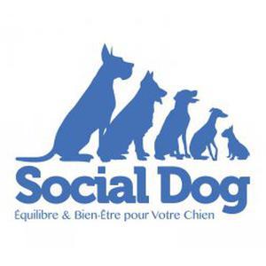 Social Dog, promenades éducatives pour chiens
