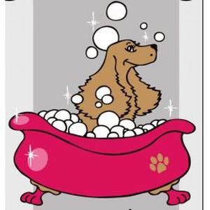 toilettage canin et félin coupe,épilation,bain,tonte