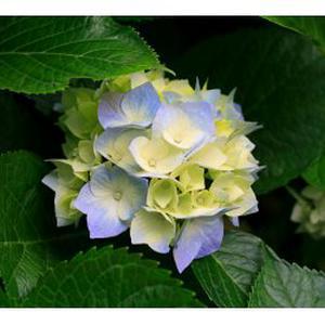 Taille d'arbustes, rosiers, tonte, création de massifs floraux
