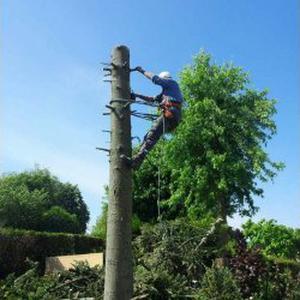 Taille de haies/elagage- abattage d'arbres, débrouissallage, jardinage