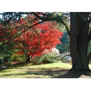 Arboriste grimpeur (Elagueur)