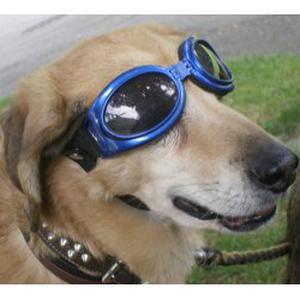 Promenades avec chien (s)