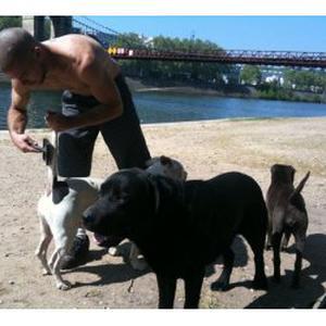 gardiennage de chiens