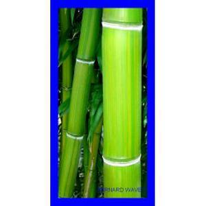massage bambous et ondulations