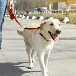 Dog walking sur Reims et Cormontreuil