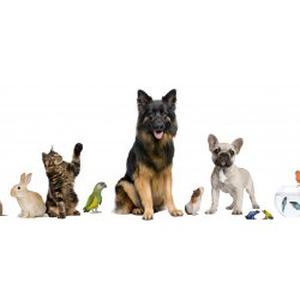 Promenades, garde d'animaux