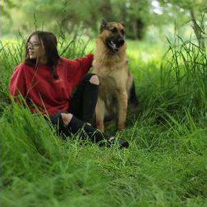 Promenade pour chiens