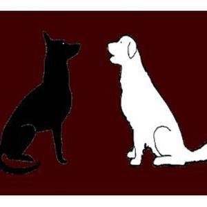 Bon Sens Canin propose des promenades d'animaux et visites  à domicile