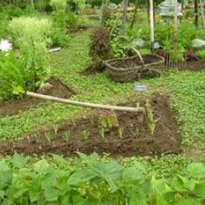 Jardinier à votre service