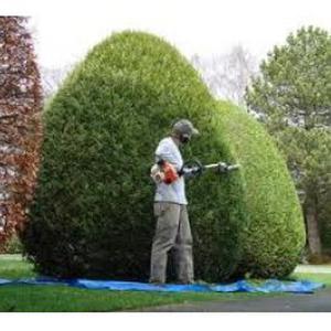 aux jardins verts:tout les concepte du jardins
