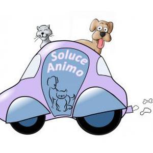 Promenades, Visites à domicile, Taxi pour vos animaux