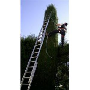 Travaux de jardinage-elagage-abattage