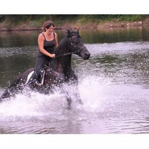Photographe amateur (la passion des chevaux & des animaux)