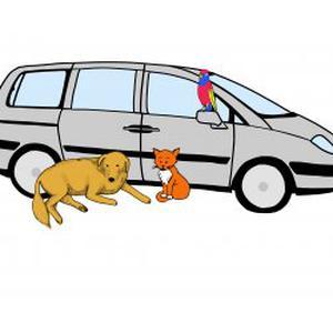Garde a domicile et promenade d'animaux
