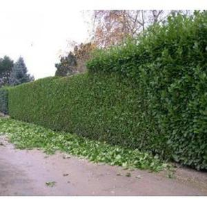 Jardinage la wantzenau 67 for Offre emploi entretien espaces verts
